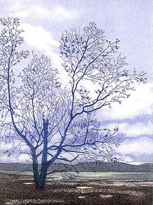 applecross tree