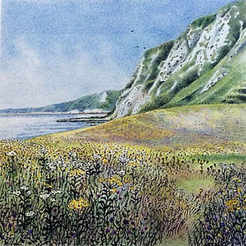 flowers at samphire hoe