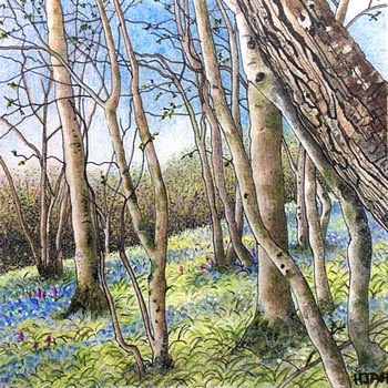 bluebell slope (sold)
