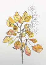 autumn branch by maryanne maltby