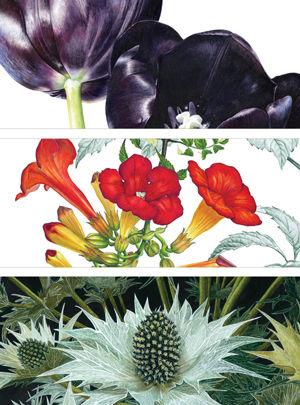 SBA Plantae