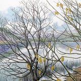 catkins by bassenthwaite thumbnail