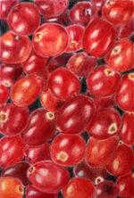 cranberries by jane buller