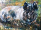 English Black Sow