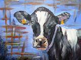 Holstein Heiffer