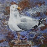 LONE HERRING GULL