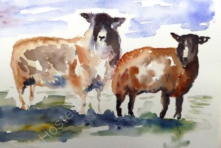 Lamb & Ewe