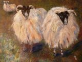 SCOTTISH BLACK FACED SHEEP
