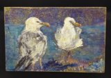 Two Herring Gulls