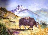 Yak-watercolour