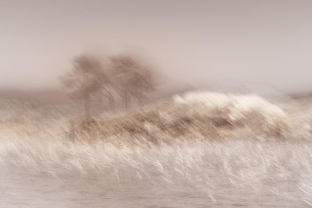 8460-Pink Haze