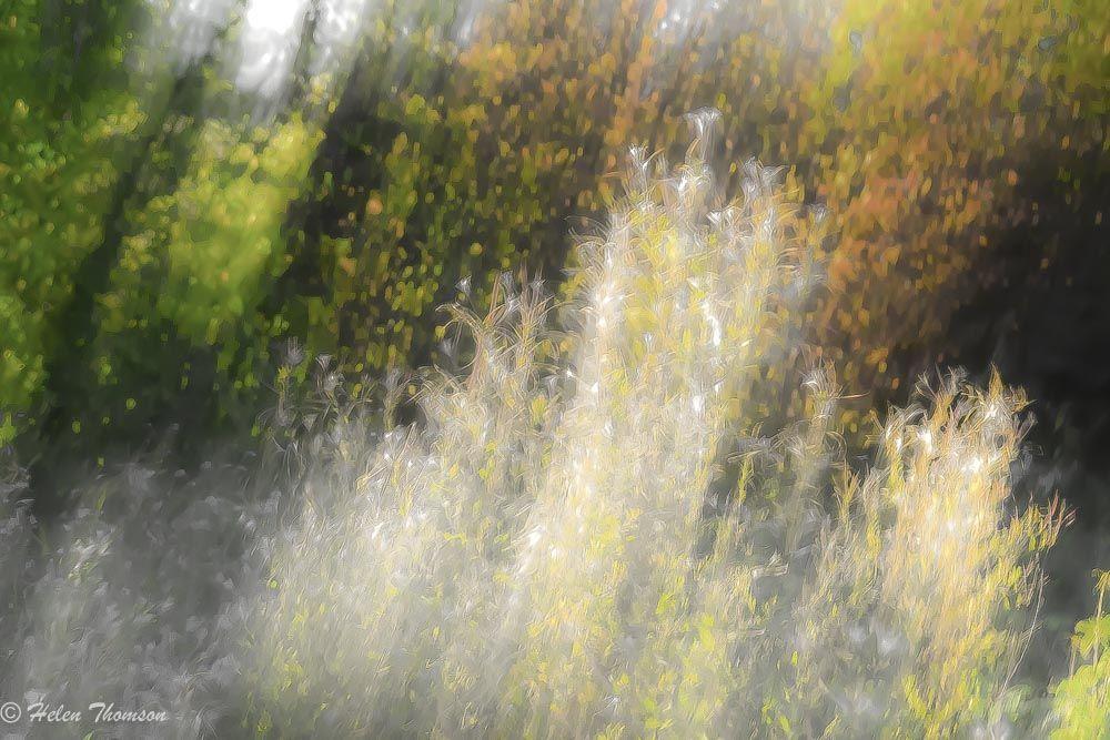 01555 'Hedgerow'