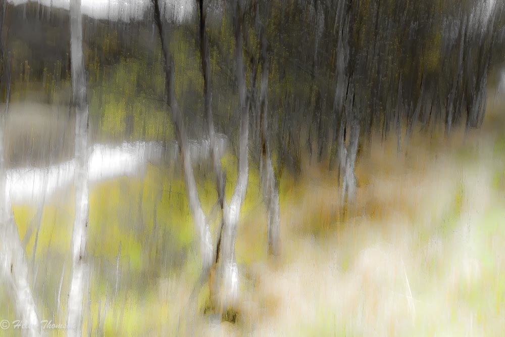 03299 'Birches by the River'