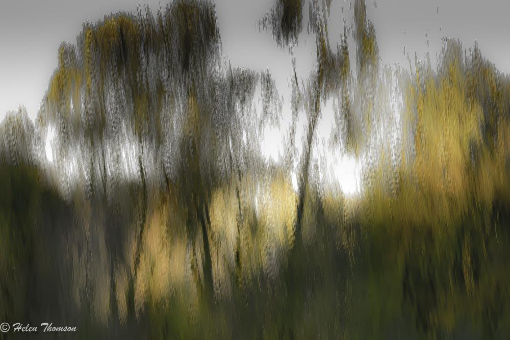 01586 'Eleganza'