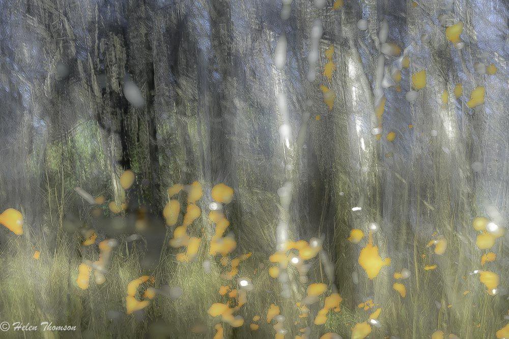 07840 'Falling Leaves'