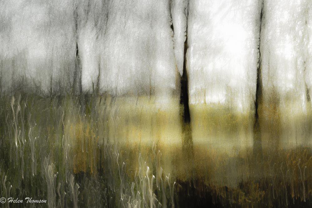 08066 'Winter Sparkle'