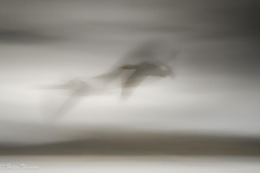 09501 'Night Flight'