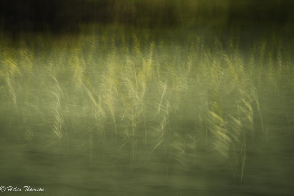 8447-Golden Wave - green