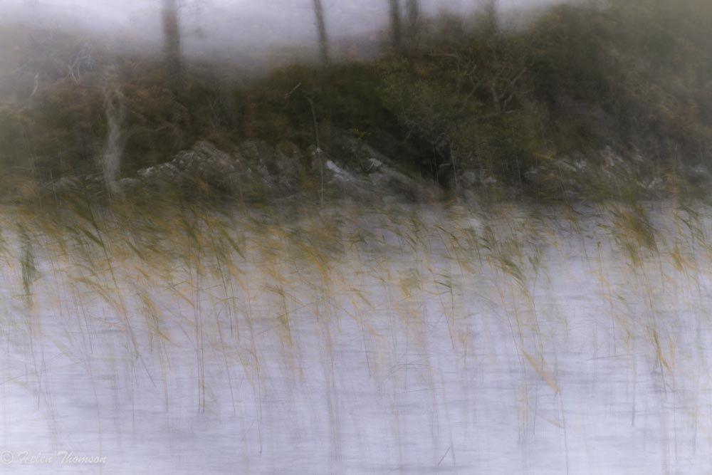 8456-e 'Reeds and Rain'