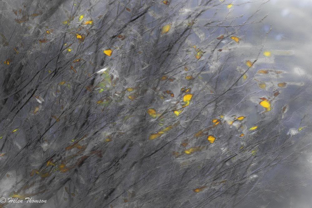8486-Tree Haze