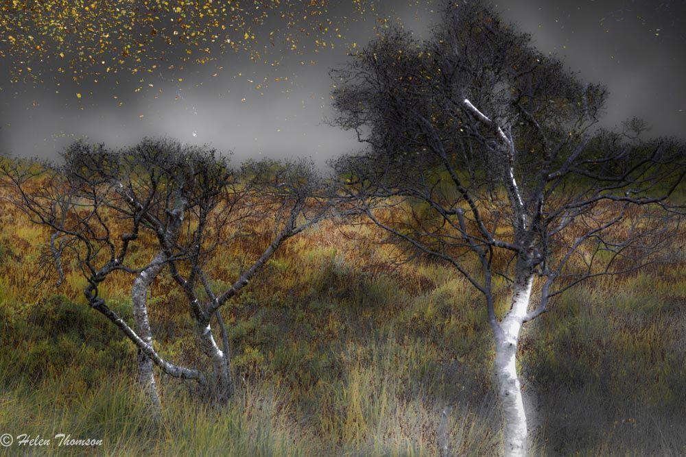 8835-Autumnal Stars