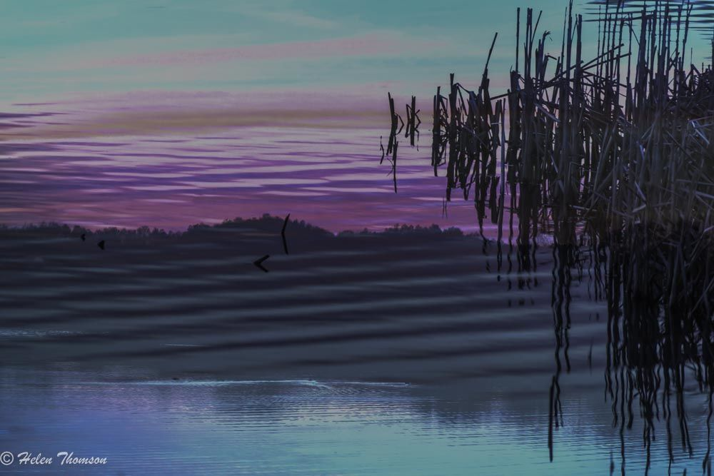 9856-Reeds and Ripples