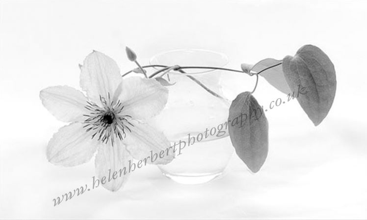 Clematis in Glass Bowl