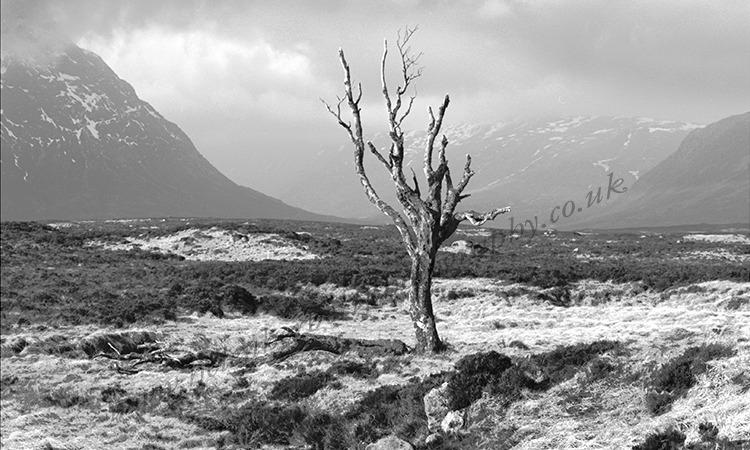 Dead Tree on Rannoch Moor