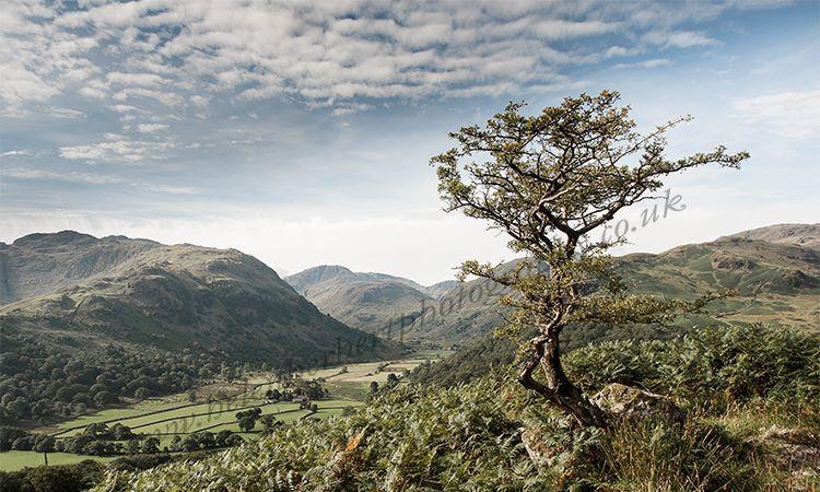 Felllside Tree