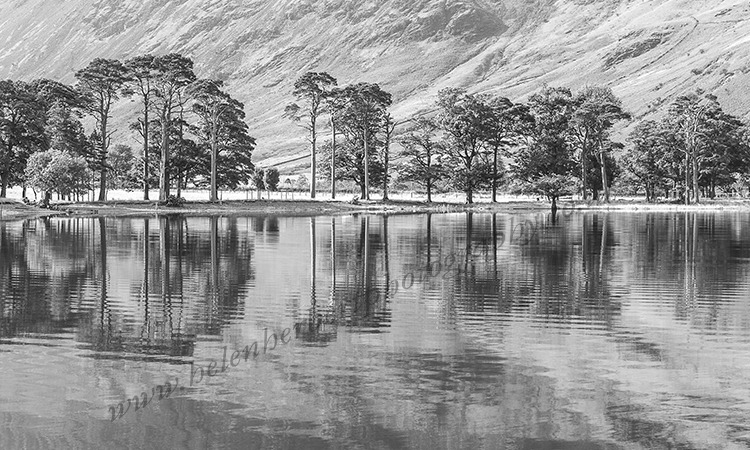 Pines At Buttermere Lake