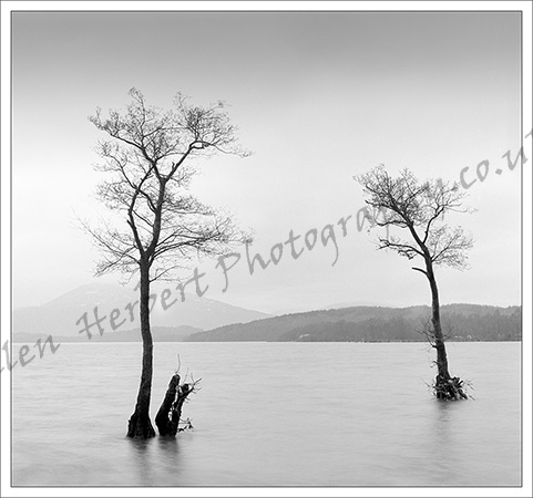 Two Trees, Loch Lomond