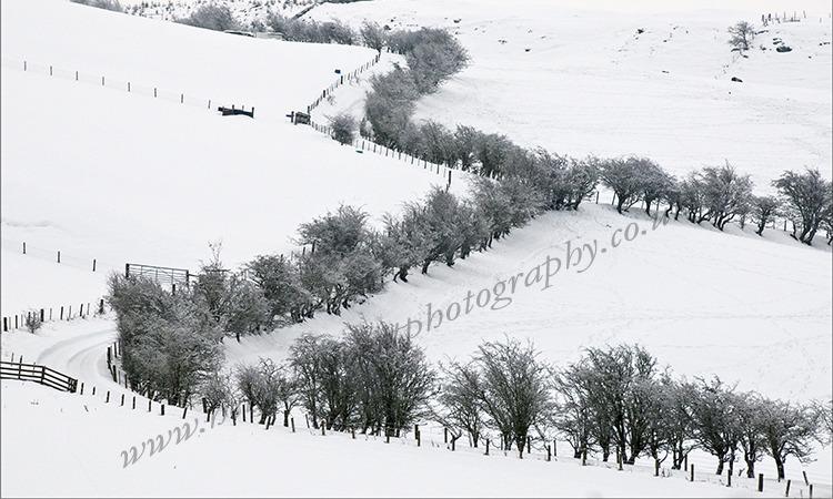 Zig Zag in the Snow