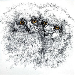 Blood Brothers 1 (eagle owlets)