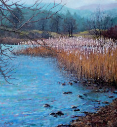 'The Reedbed'