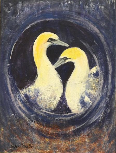 450_Gannets_Greeting_Spiral_16x12in_Acylic
