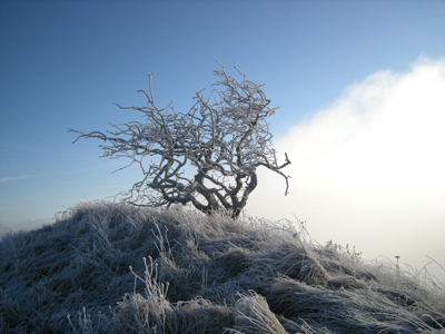 Frosted Summit