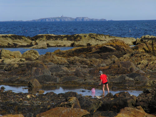 Searching in the Rock Pools
