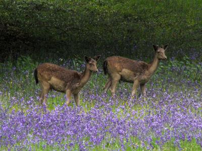 3. Young Deer