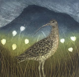 Curlew and Cotton Grass