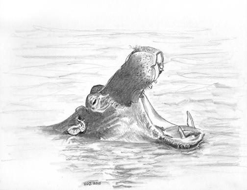 Yawning Hippo.