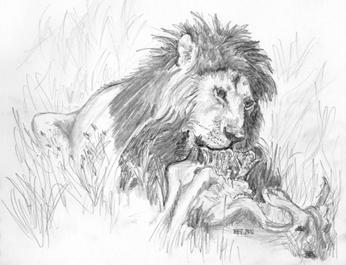 The Lion Feeds.