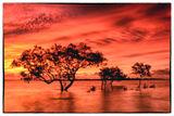 Mangroves at Sunsert