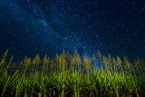 MH0072 Sugar Cane and Milky Way, Goldsborough RS