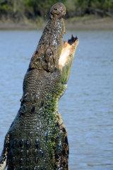 MH0228 Jumping Crocodile RS