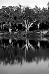 MH0233 Murray River Reflections RS