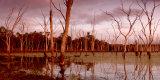 MH0512 Warruma Swamp RS