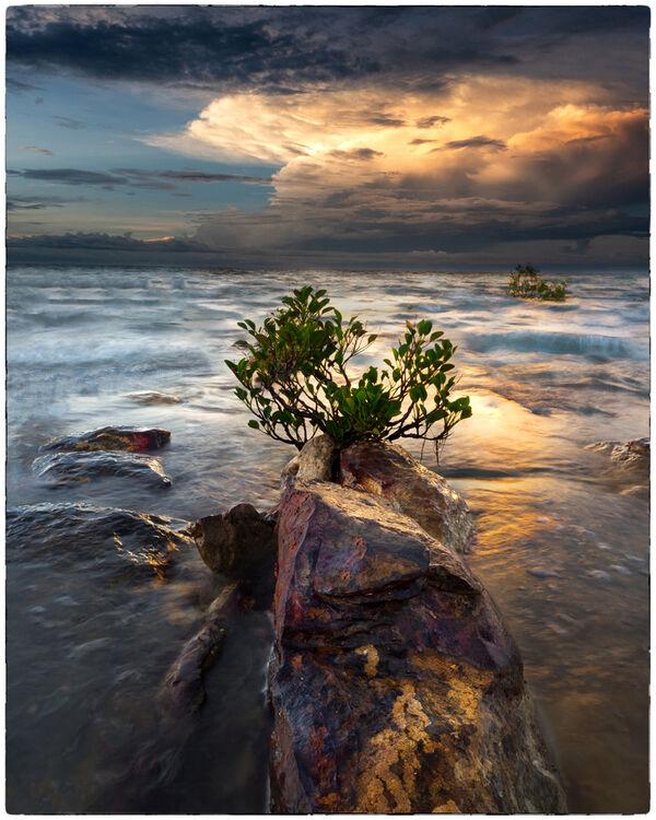 Mangrove Life