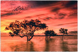 Sunset Mangroves