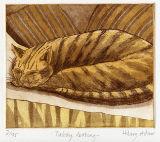Tabby,-Resting