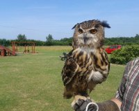 Hill Farm Birds of Prey
